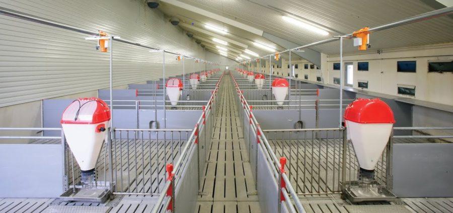 Кормоавтоматы Tube-O-Mat на свинокомплексе