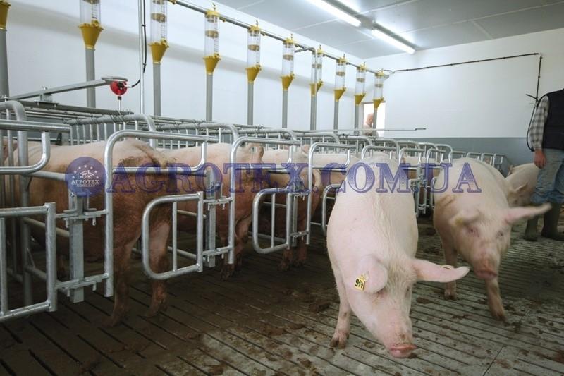 Автоматическая система кормораздачи на свинокомплексе